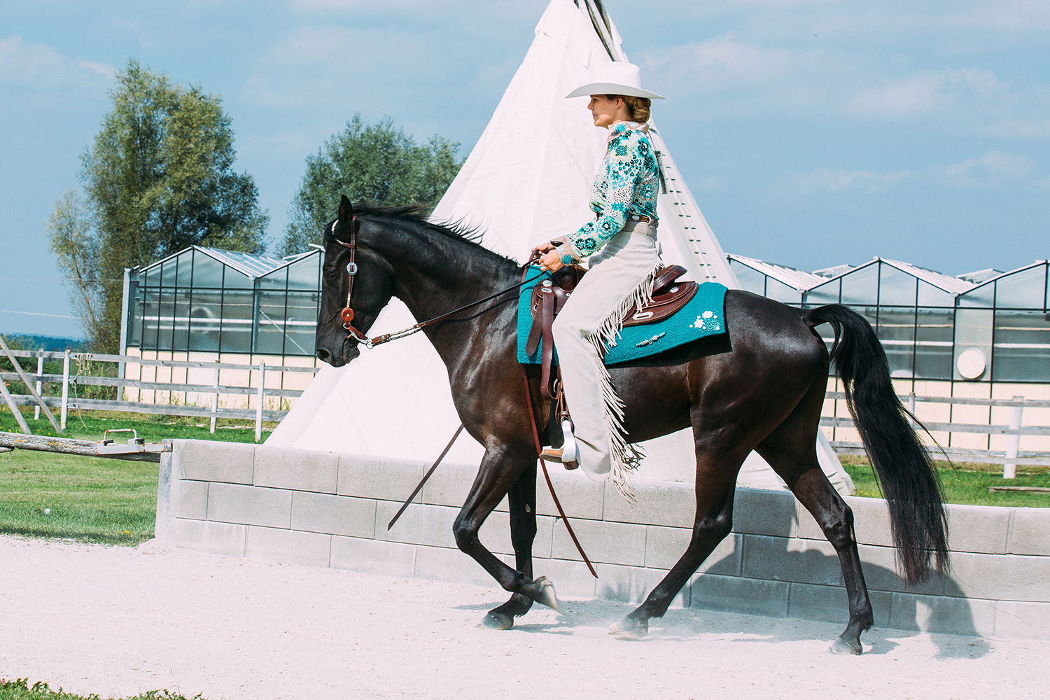 Tennessee Walking Horse Club Europe